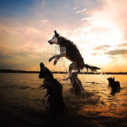 dog beach pcwaterislife waterislife