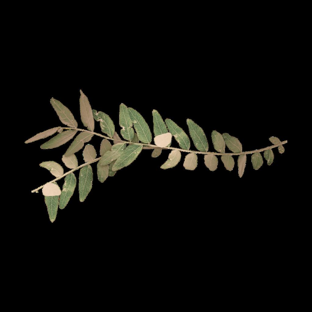 #freetoedit #leaf
