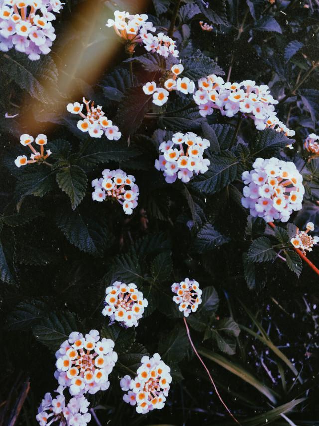#photography #myclick #flowers 🌺
