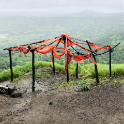 remixit nature trees fog rain freetoedit