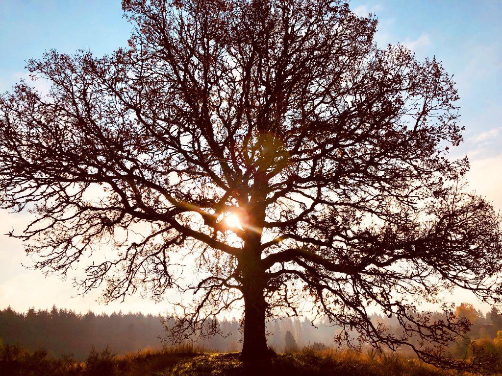 #tree #treeoflife #sun #shiningsun #field #freetoedit