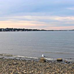 pastel sunset beach horizon bird freetoedit