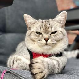 bkh petsandanimals photography cat nofilter