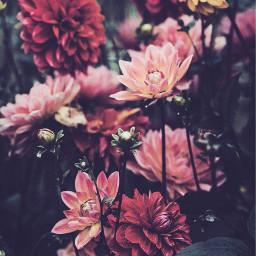 background flower flowerphotography aesthetic floweraesthetic