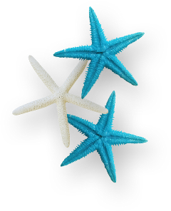ladymc starfish sea ocean blue freetoedit