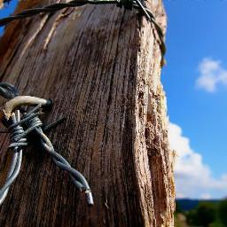 freetoedit myphoto photography nature naturephotography