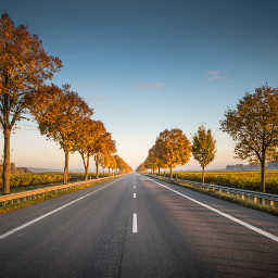 road trees background backgrounds freetoedit