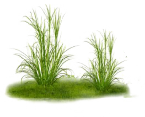 freetoedit ftestickers grass groundcover green