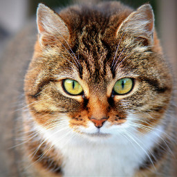 cat cats animal animals pet freetoedit
