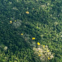 amazonia freetoedit