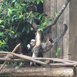 freetoedit monkey myfriend animal