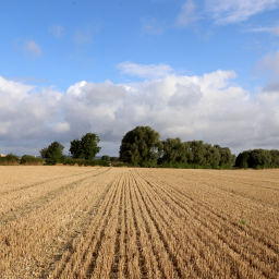 landscape countryside myview trees field freetoedit