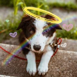 freetoedit cute puppy halo hearts