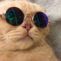 fofo demais lindo gato tumblr