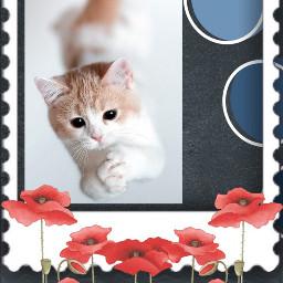 freetoedit cat flowers palettesticker complex