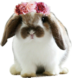animal rabbit lapin freetoedit