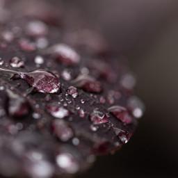 freetoedit remixit leaf dew drops