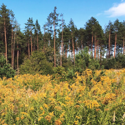 photography nature forest trees flowers freetoedit