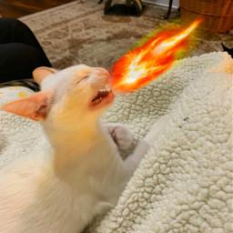 kitten flamesofire