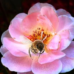 remix bumblebee flower dust freetoedit