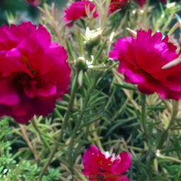 flower nature freetoedit