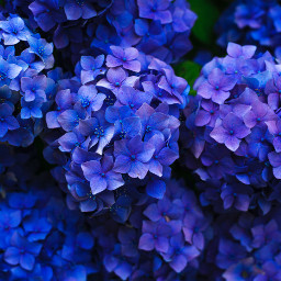 flower flowers nature background backgrounds freetoedit