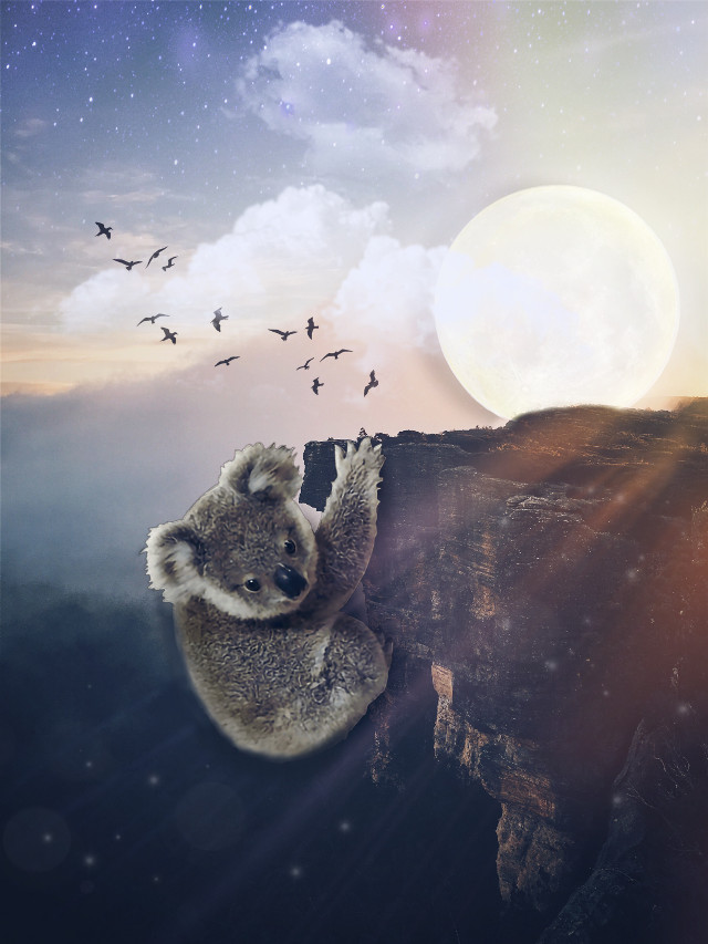 #freetoedit #coala