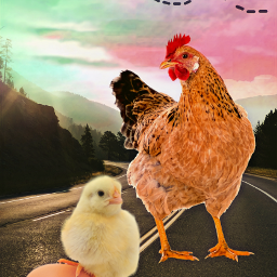 chicken chick egg cat flyingcat freetoedit ecgiantanimals