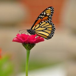 mypicture beautiful butterfly flowers colorful