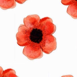 freetoedit watercolor red flowers poppies