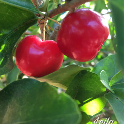fruit nature photography red puertorico
