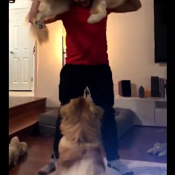 freetoedit markiplier chica workout routine