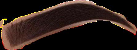 eyebrows eyebrow freetoedit