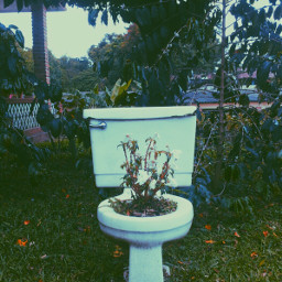 plants love solitary alone photography