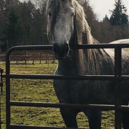 pcpetsofpicsart petsofpicsart horse pet bff