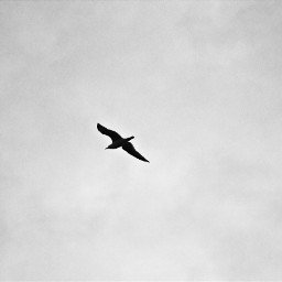 sky bird birds bw background freetoedit