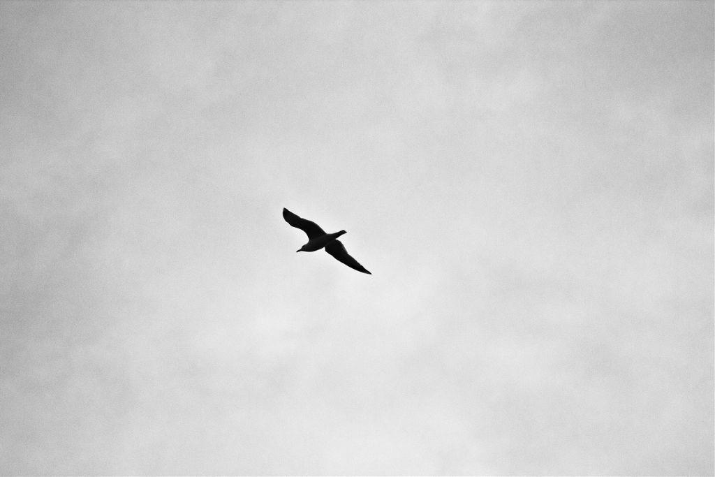 Let your imagination run wild. Unsplash (Public Domain) #sky #bird #birds #bw #background #freetoedit