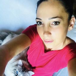 cat siberian kitty pets gatto