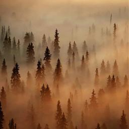 freetoedit nature natura bosque