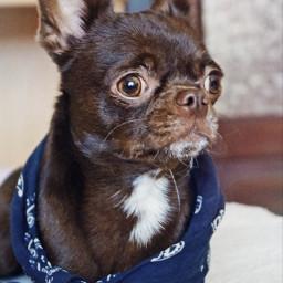 freetoedit pets dog cute animal pcpetsofpicsart