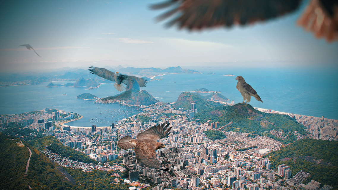 Careful with the eagles - #freetoedit #remixit #eagles #birds #filter #unfocuseffect #surreal