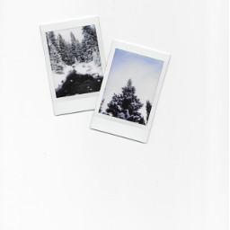 winter polaroid fujifilm evergreen snow freetoedit