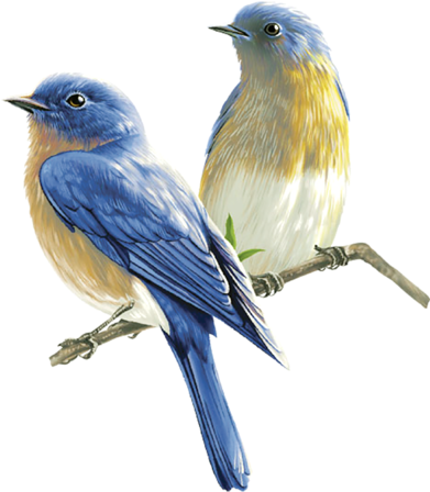 Birds Sticker By Nataly