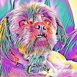 dog shihtzu furbaby dogslife colourful_shots