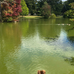 nature dog pets cute green