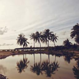 reflection coconutpalm naturesbeauty
