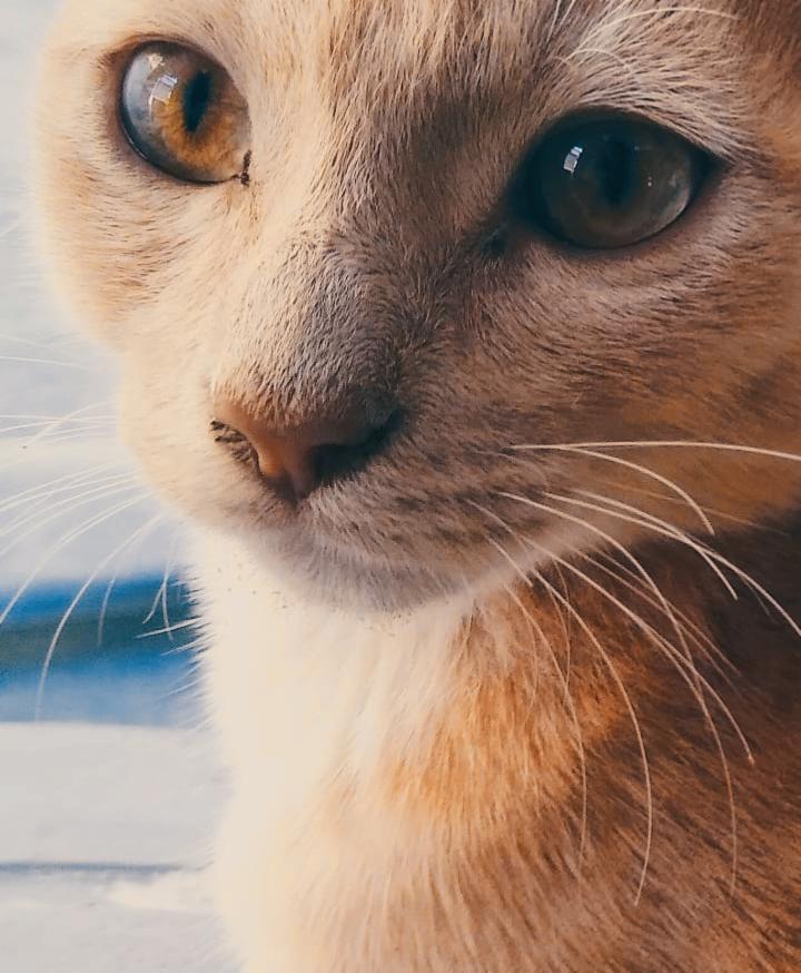 Mushu ... #pcpetsofpicsart #petsofpicsart #mypet #cats #kawai #cute