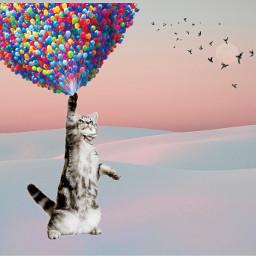 freetoedit cat ballon birds pastelcolors ircpastelremix