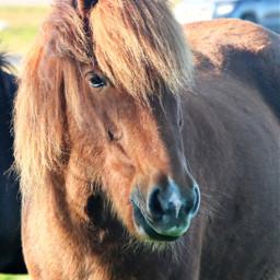 freetoedit horse closeup myphoto island