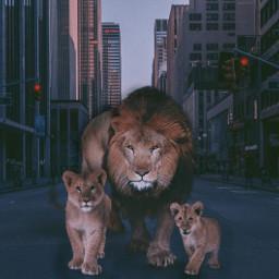 freetoedit lion lionking city